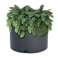 Oasis Self-Watering Planter